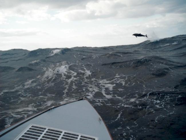 Nederlandse zeilers redden Hongaarse kanoër