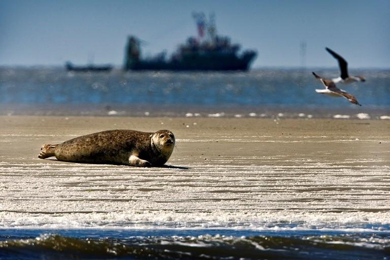 'Waddenzee verdrinkt nog deze eeuw'