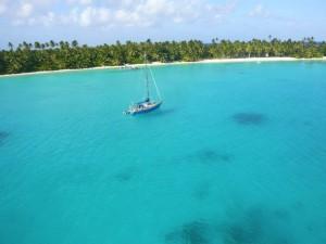 Blauwe Pinquin op Cocos