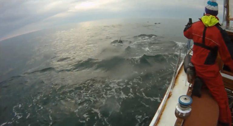 Heading South: Zwemmen met dolfijnen