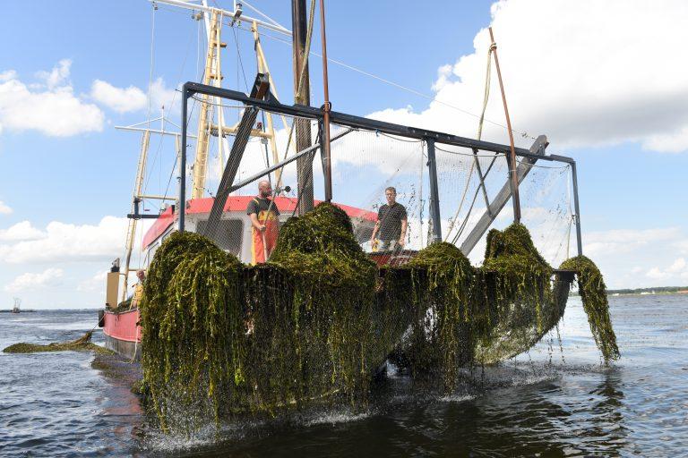 Watersportorganisaties maken vuist tegen fonteinkruid