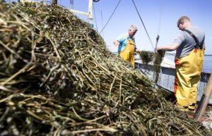 Waterplantproblematiek wordt nog uitgebreider aangepakt