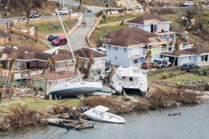 Tuigers gezocht op Sint Maarten