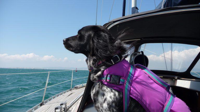 Waddenhaven Vlieland wint award voor leukste haven voor honden