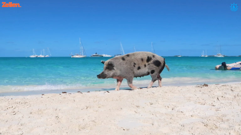 SY Anne Marie (S4A9): De Bahamas