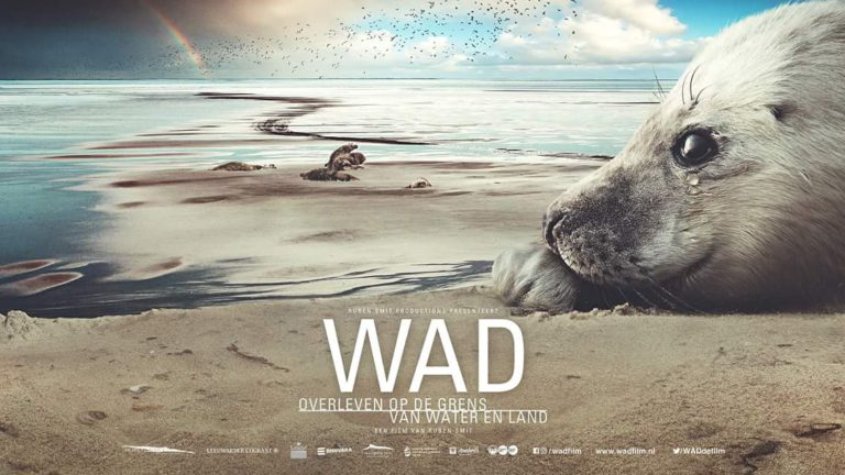Trailer WAD: Close-up van de Waddenzee