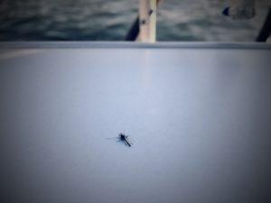 5 tips om muggenbeten te voorkomen