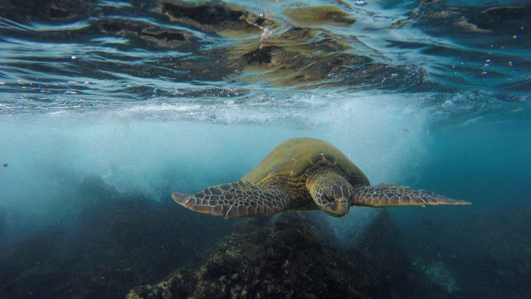 WWF: 'We kunnen niet langer wegkijken van een schildpad die stikt in een plastic zakje'