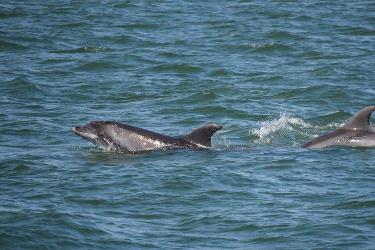 Dolfijnen gespot in de vaargeul voor de Noord-Hollandse kust