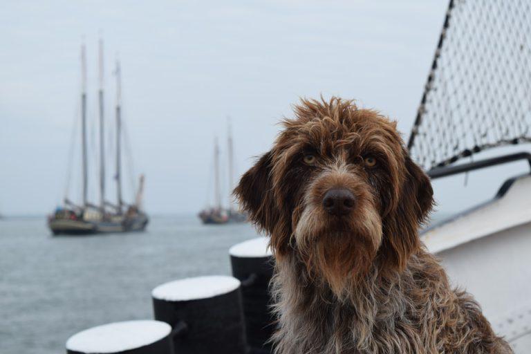 100x schattige foto's van jullie huisdieren aan boord