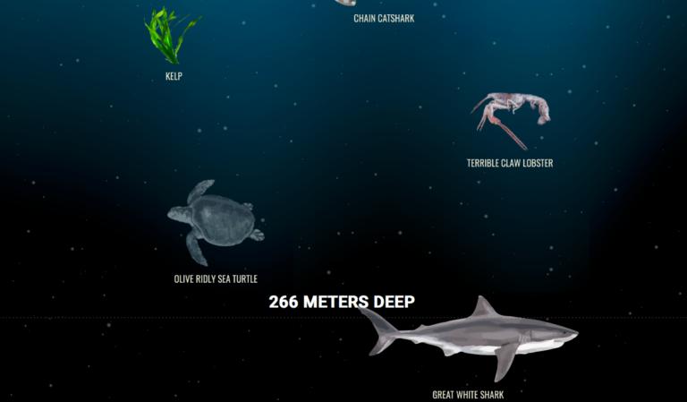 Heb jij deze interactieve diepzee-visualisatie al bekeken?