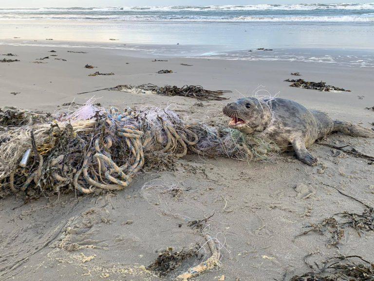Netten, touw en nylondraad kostte zeehond op Ameland bijna het leven