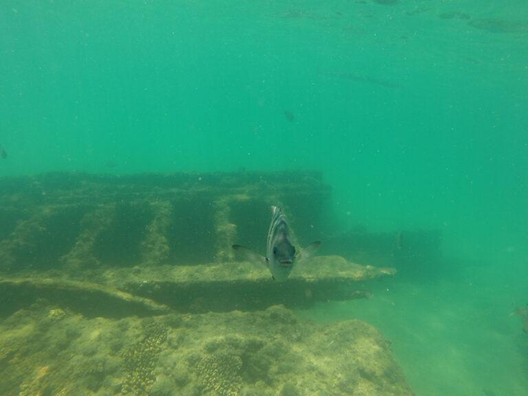 Finse duikers vinden historisch Nederlands zeilschip op de zeebodem