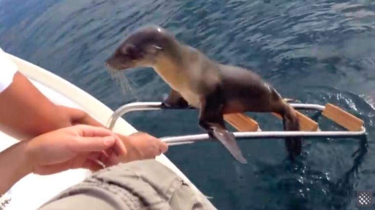 7 bijzondere situaties aan boord die gelukkig gefilmd zijn