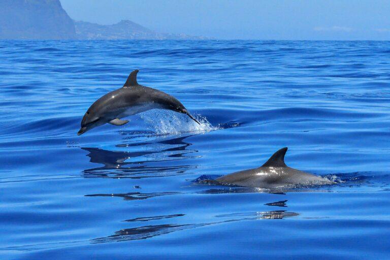 Video: Dolfijnen vergezellen 49erFX-zeilsters