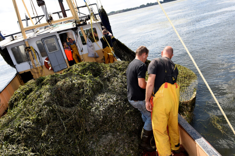 Strijd tegen waterplanten begonnen bij Randmeren